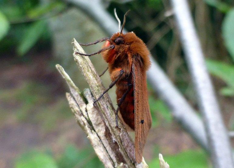 Sterke afname van insecten in Nederland bevestigd