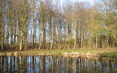 Meer wandelend bos voor Nederland