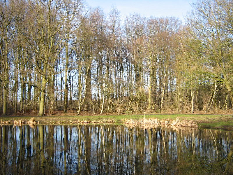 Amsterdamse Bos in de winter