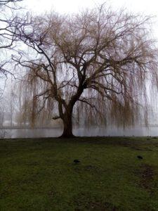 boom in Zuiderpark Den Haag