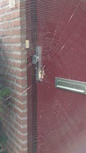 deur met spinnenweb