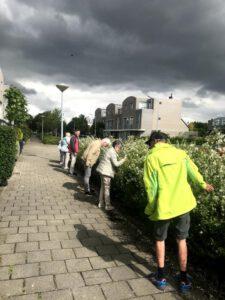 ruiken aan bloeiende Toscaanse jasmijn