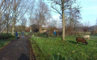 Roomburg in Leiden, woensdag 25 november