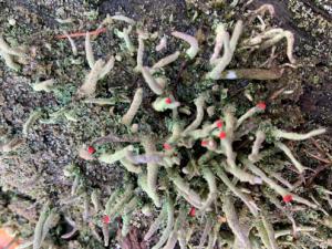 paddenstoelen Noordwolde