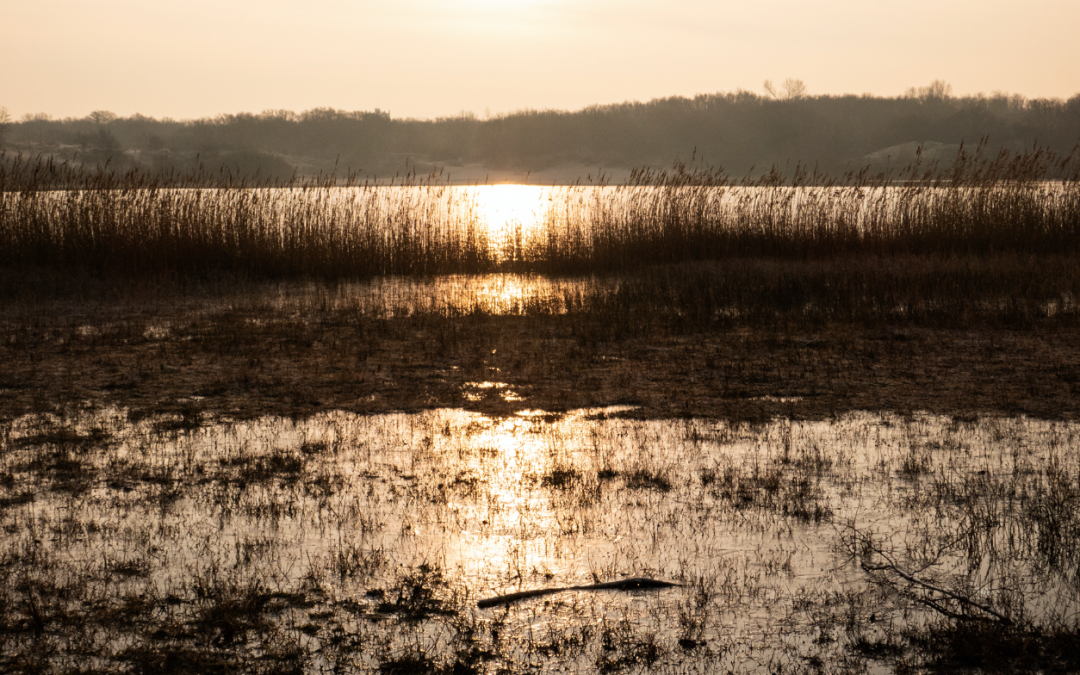 Nationaal Park Zuid-Kennemerland, zaterdag 28 december