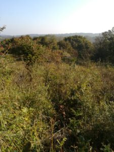 uitzicht op natuur vanaf Konijnenberg
