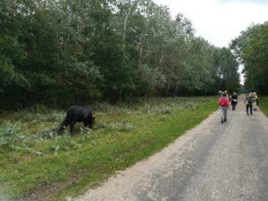 wandelaars en konikpaard