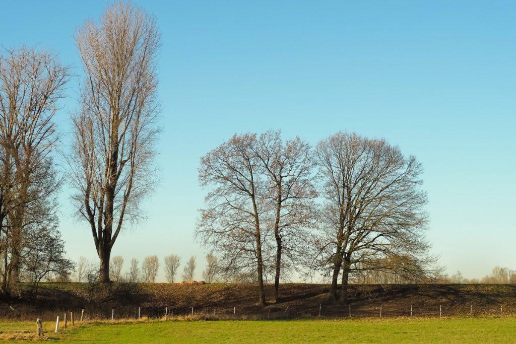 winterse bomen aan de dijk