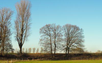 Bos-klimaatpilots succesvol: meer dan 80.000 bomen aangeplant