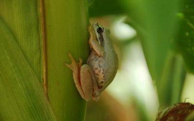 Biodiversiteit wereldwijd in gevaar
