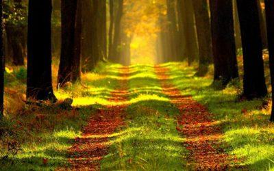 Kansen voor bomen: de longen van de aarde