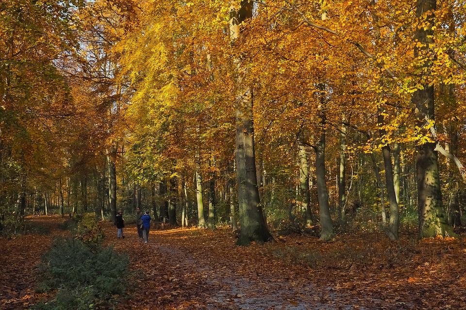 wandelaars in herfstig bos