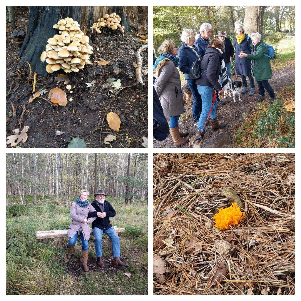 paddenstoelen en wandelgroep in Oranjewoud