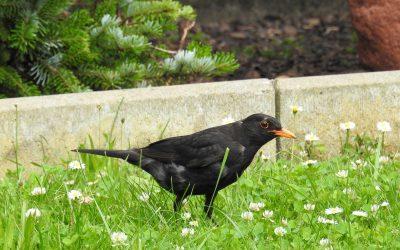 Vogels in tijden van droogte