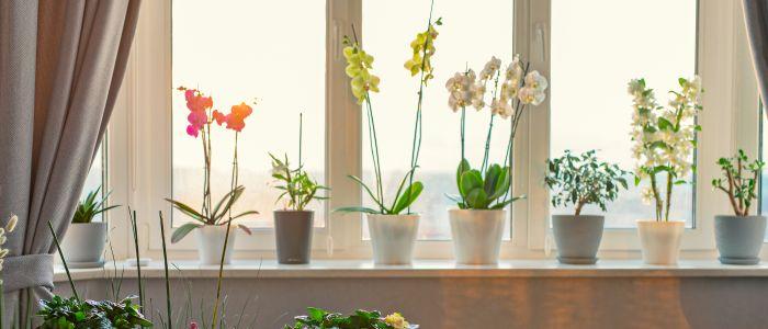 5 effecten van planten en bloemen op de gezondheid