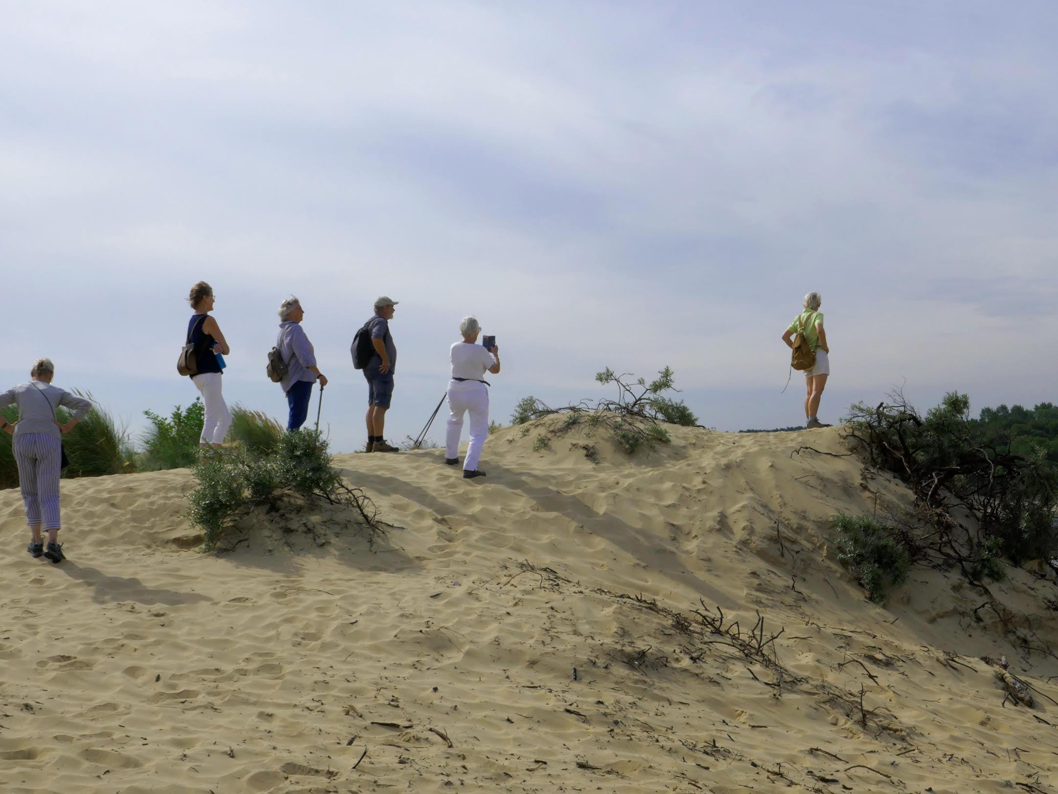 GNW-wandelgroep op een Kennemerduin