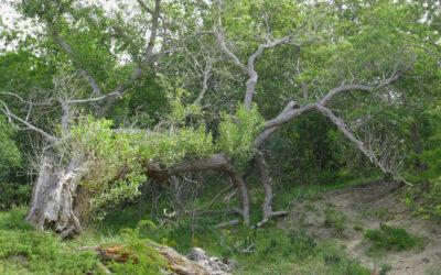 Zaterdag, 1 augustus, Nationaal Park Zuid-Kennemerland