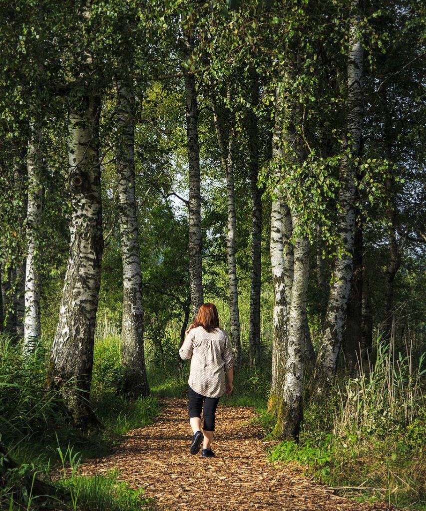wandelaar in berkenbos