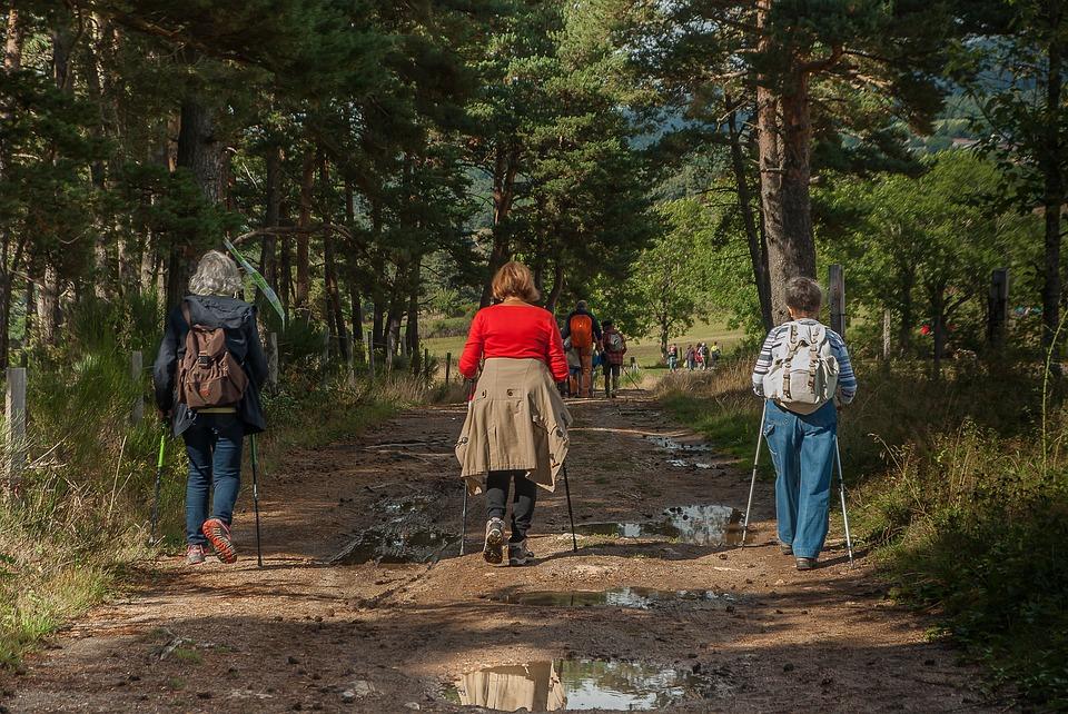Wat een simpele wandeling ons biedt: tijd om naar een vogeltje te staren én een gezond brein