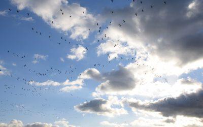 Gedicht uit Egmond-Binnen: 'Wandelverlangen'